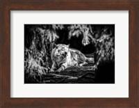 Framed Howling Wolf Black & White