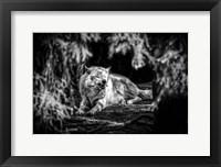 Framed Howling Wolf Black & White