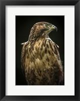 Framed Predator Bird
