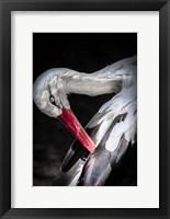 Framed Stork II