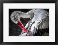 Framed Stork III