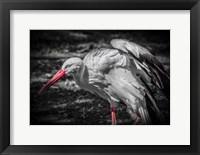 Framed Stork IV