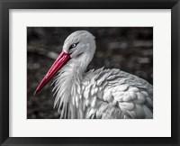 Framed Stork V
