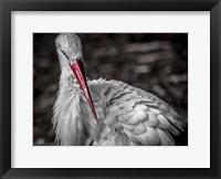 Framed Stork VI