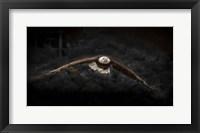 Framed Sea Eagle Flight Black & White