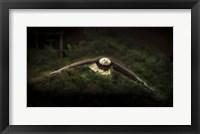 Framed Sea Eagle Flight