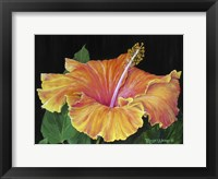 Framed Hibiscus