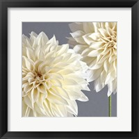 Framed 2 Cream Dahlias on Gray