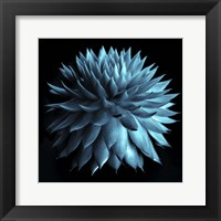 Framed Blue Cacti on Black