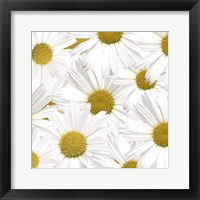 Framed Collection of Daisies
