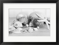 Framed Collection of Shells BW