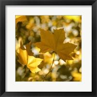 Framed Fall Leaves1