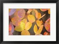 Framed Fall Leaves 2