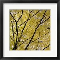 Framed Fall Leaves 3
