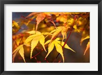Framed Fall Leaves 7