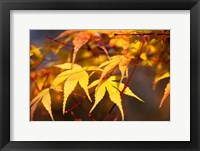 Framed Fall Leaves 7