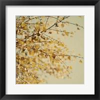 Framed Fall Leaves 10