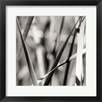 Framed Leaves BW 2