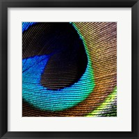 Framed Peacock Feather 2