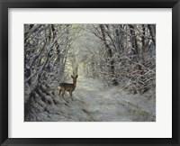Framed Winter Path