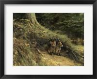 Framed Fox Cubs