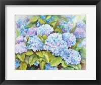 Framed Cluster of Hydrangeas