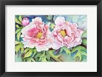 Framed Pair of Peonies