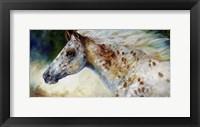 Framed Appaloosa Spirit