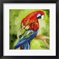Framed Macaw Tropical