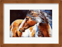 Framed Mohican Indian War Horse