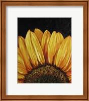 Framed Sunflower Sunflower