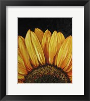 Framed Sunflower Sunflower