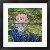 Framed Sweet Lotus