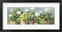 Framed White Geraniums v2