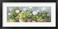 Framed White Geraniums v2