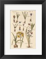 Framed Vintage Florilegium II