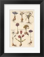 Framed Vintage Florilegium I