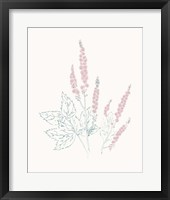 Framed Flowers on White VII Contemporary