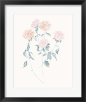 Framed Flowers on White VI Contemporary