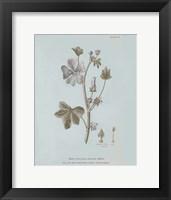 Framed Conversations on Botany VII Blue