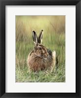 Framed Brown Hare
