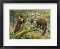 Framed Pine Martens