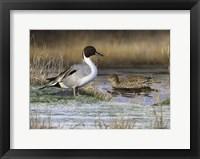 Framed Pintail Ducks