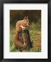 Framed Red Squirrel