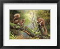 Framed Red Squirrels