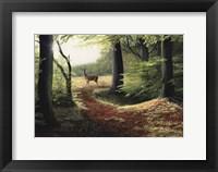 Framed Roe Deer