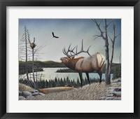 Framed Bugling Elk