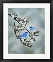 Framed Signs of Spring