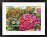 Framed Pink Hydrangea