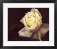 Framed Rose Elfe
